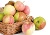 Закупка яблок-2018
